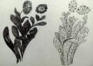 Декоративная переработка растительных форм
