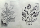 Рисунки Смирновой Ани